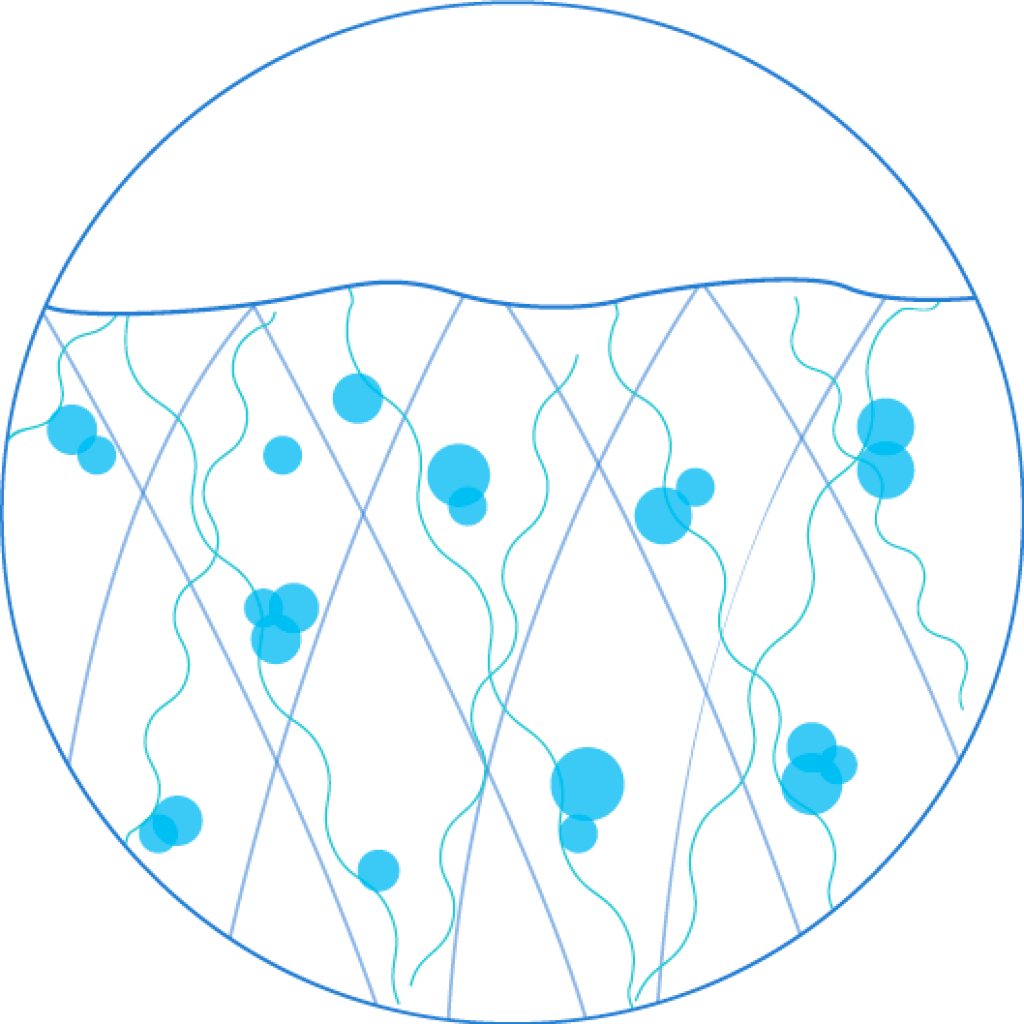 Collagen level graphic of young skin