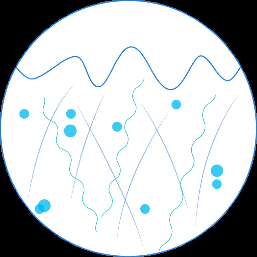 Collagen level graphic of mature skin